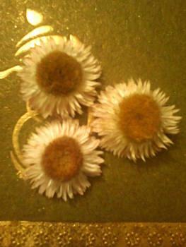 Old Flowers Beauty by Amisha Tripathy