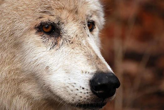 Old Hunter by Lori Tambakis