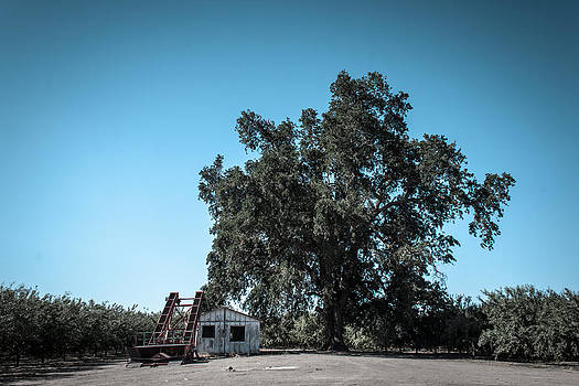 Old Oak and Shed by Chris Fullmer