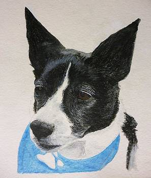 Old Pup Pet Portrait 5 x 7 inch Watercolor You Provide the Picture or Idea Made to Order  by Shannon Ivins