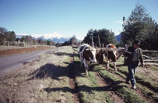 Old style Chilean Farmer by Thomas D McManus