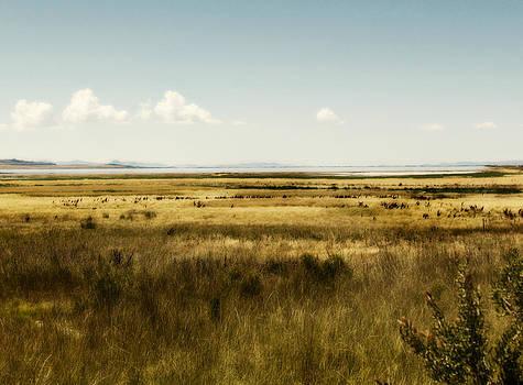 Old West by Carol Kristensen