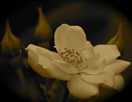 Michelle Cruz - Old World Bloom