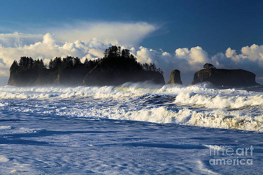 Adam Jewell - Olympic Ocean Swirls