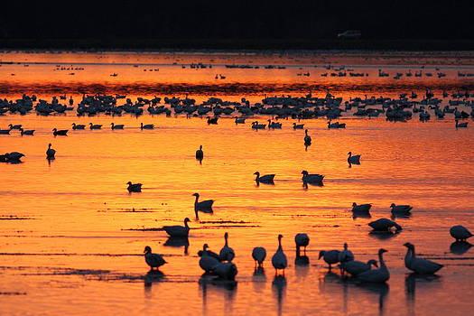 On Golden Pond  by Glenn Lawrence