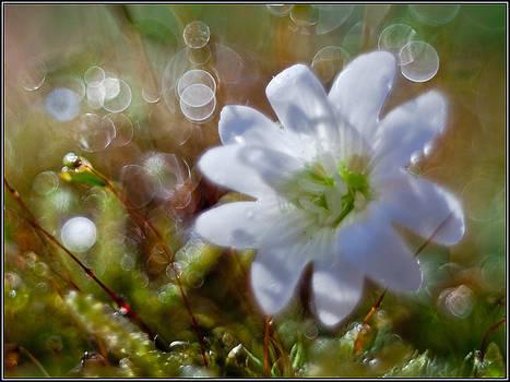 On grass by Adrian Krol