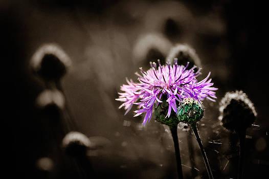 Zoran Buletic - On The Meadow