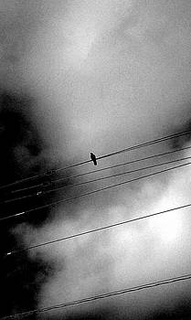 Kevin D Davis - On The Wire