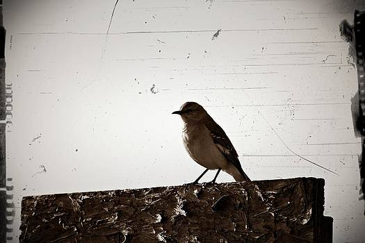 KayeCee Spain - Once Upon A Mockingbird