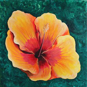 One nice Hibiscus by Robert Thomaston