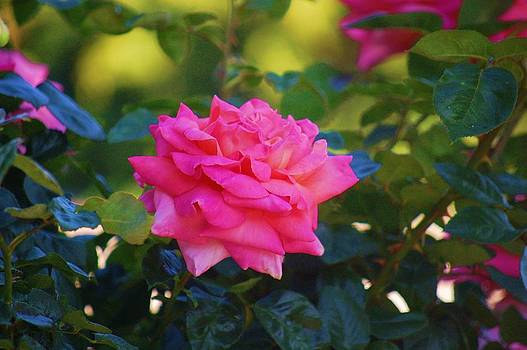 One Perfect Rose by Helen Carson