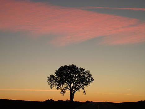 One Tree Dawn by Brian  Maloney
