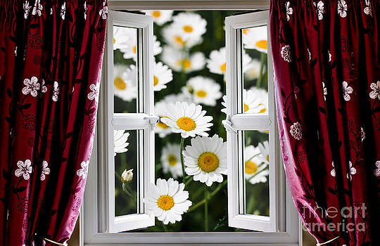 Simon Bratt Photography LRPS - Open windows onto large daisies