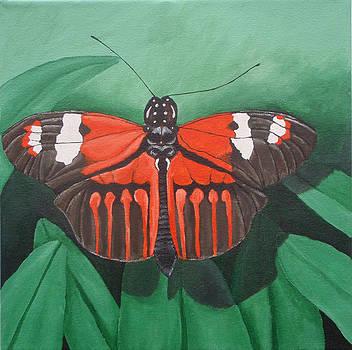 Orange Butterfly by Brandy Gerber