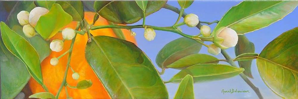 Orange Cachee by Muriel Dolemieux