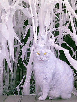 Scott Ashkenaz - Orange Cat Infrared