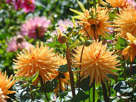 Baslee Troutman - Orange Dahlia Flowers art prints Canvas Framed