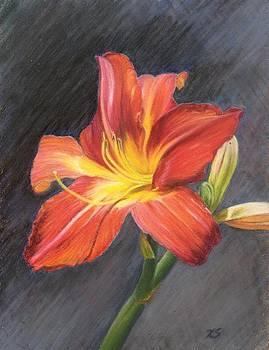 Orange Daylily by Xenia Sease