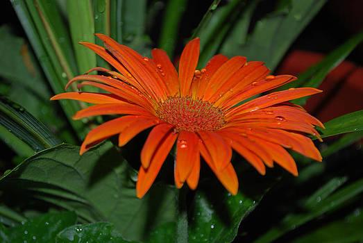 Michelle Cruz - Orange Dream