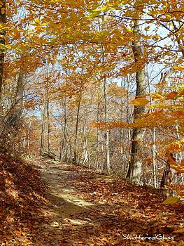 Orange Fall Trail by ShatteredGlass Photography
