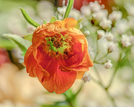 Orange Flower by Jim Proctor