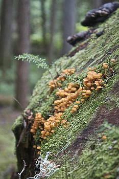 Orange Fungi by Sylvia Hart