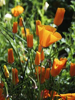 Orange by Jayne Howard