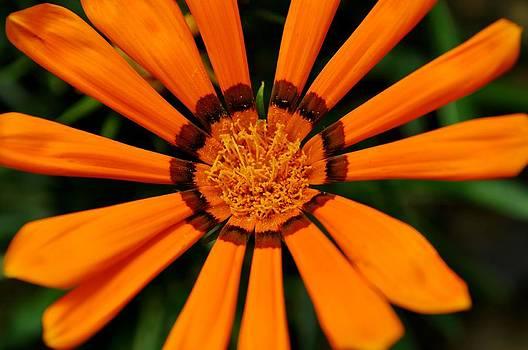 Orange Love by Jose Diogo