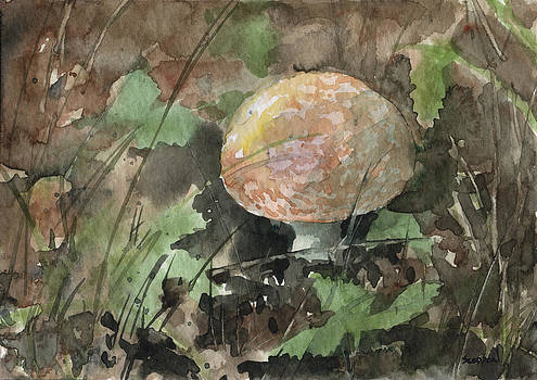 Orange Mushroom by Sean Seal