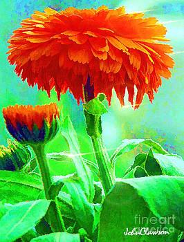 Orange Pop by John Clawson