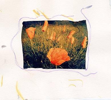 Orange Poppies by Gwen Strahan