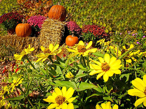 Chantal PhotoPix - Orange Pumpkins and Yellow Daisies at a Farmer