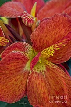 Deborah Benoit - Orange red Flowers