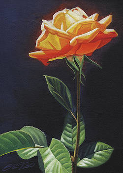 Orange Rose no. 2 by Steven Tetlow