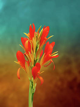 Orange spray of Flowers on Golden Blue by Michael Taggart II