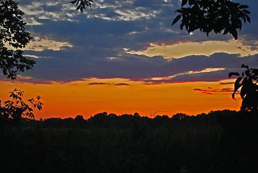 Michelle Cruz - Orange Sunset
