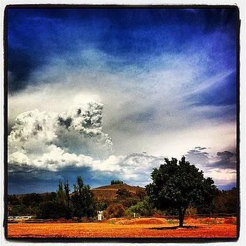 Orange Tree & Cloud by Darin R  McClure