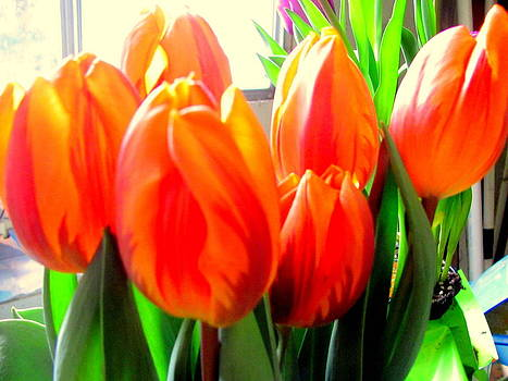 Orange Tulips in Sunshine by Amy Bradley