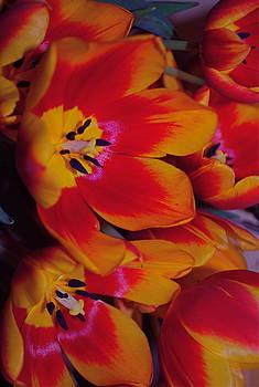 Michelle Cruz - Orange Tulips
