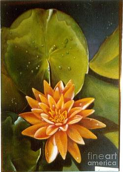 Geri Jones - Orange Waterlily