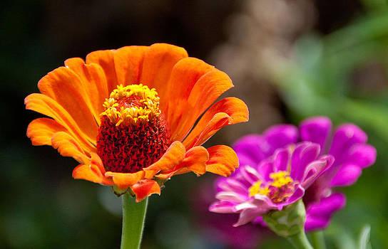 Orange Zin by Dana Kern