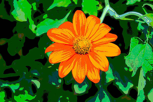 Orange Zinnia by Bob Whitt