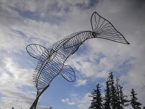 Orca by Ben Dye