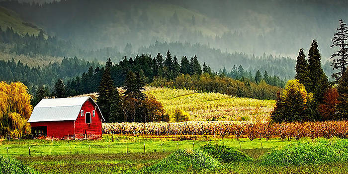 Orchard Valley by Amber Schenk