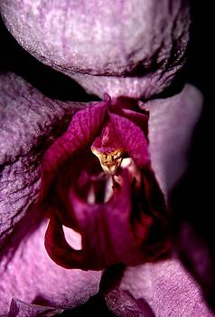 Orchid - Gone By - 3 by Robert Morin
