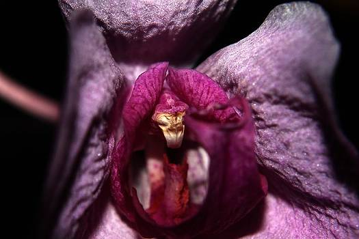Orchid - Gone By - 5 by Robert Morin