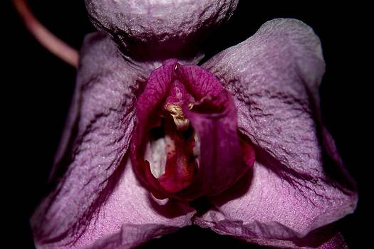 Orchid - Gone By - 6 by Robert Morin