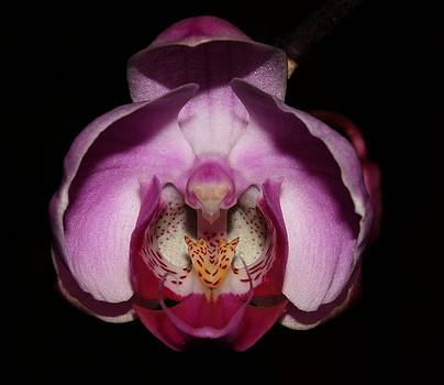 Orchid 2012 1 by Robert Morin