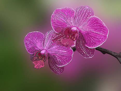 Orchid 6 by Jesus Nicolas Castanon