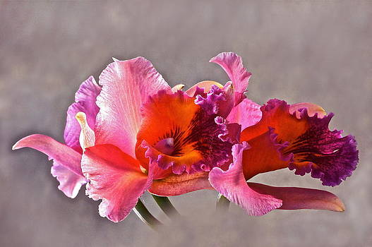 Byron Varvarigos - Orchid And Fog